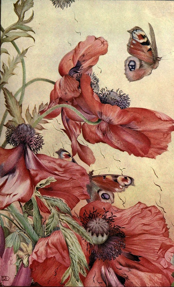 Amapolas-News-of-spring-and-other-nature-studies-1917
